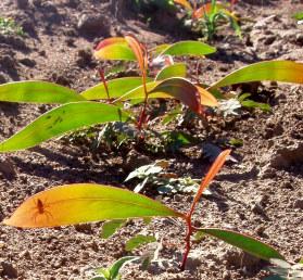 direct seeding success